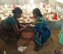 Poultry Up, Poverty Down